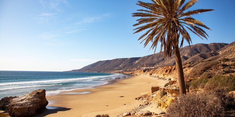 Beach in Agadir with a palm tree