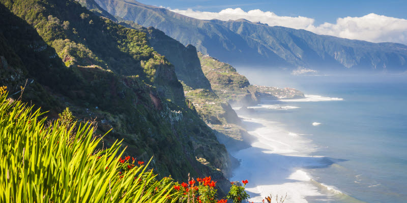 Flowers with coast in the background in Madeira