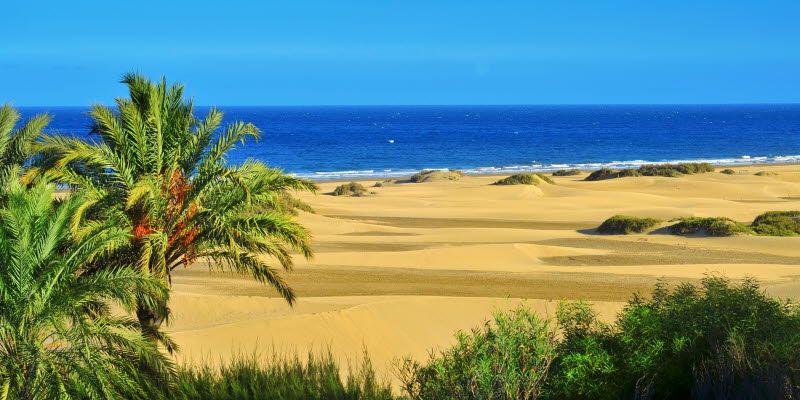 Beach and palms in Gran Canaria Maspalomas