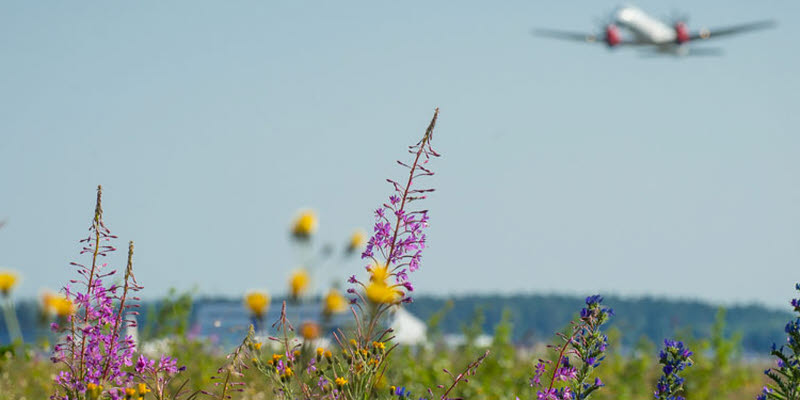 Flowers and airplanes