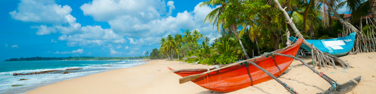 Beach with boats and palm trees in Sri Lanka